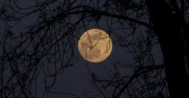 Photo of full moon through trees at night by Aron on Unsplash